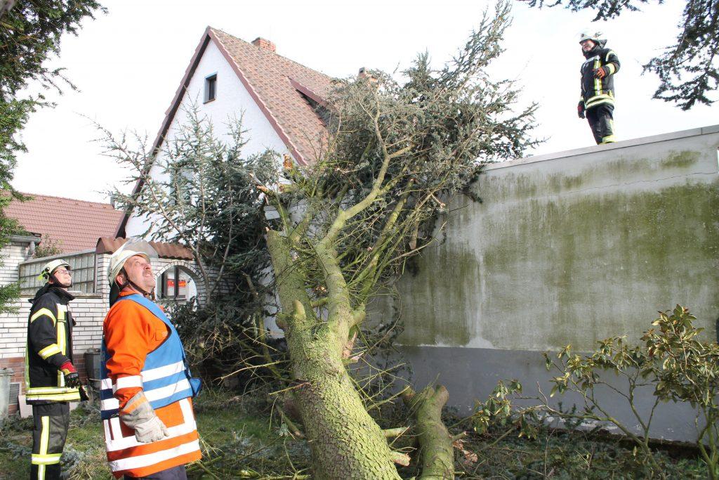 Niklas Sorgte Fur Chaos Neue Braunschweiger