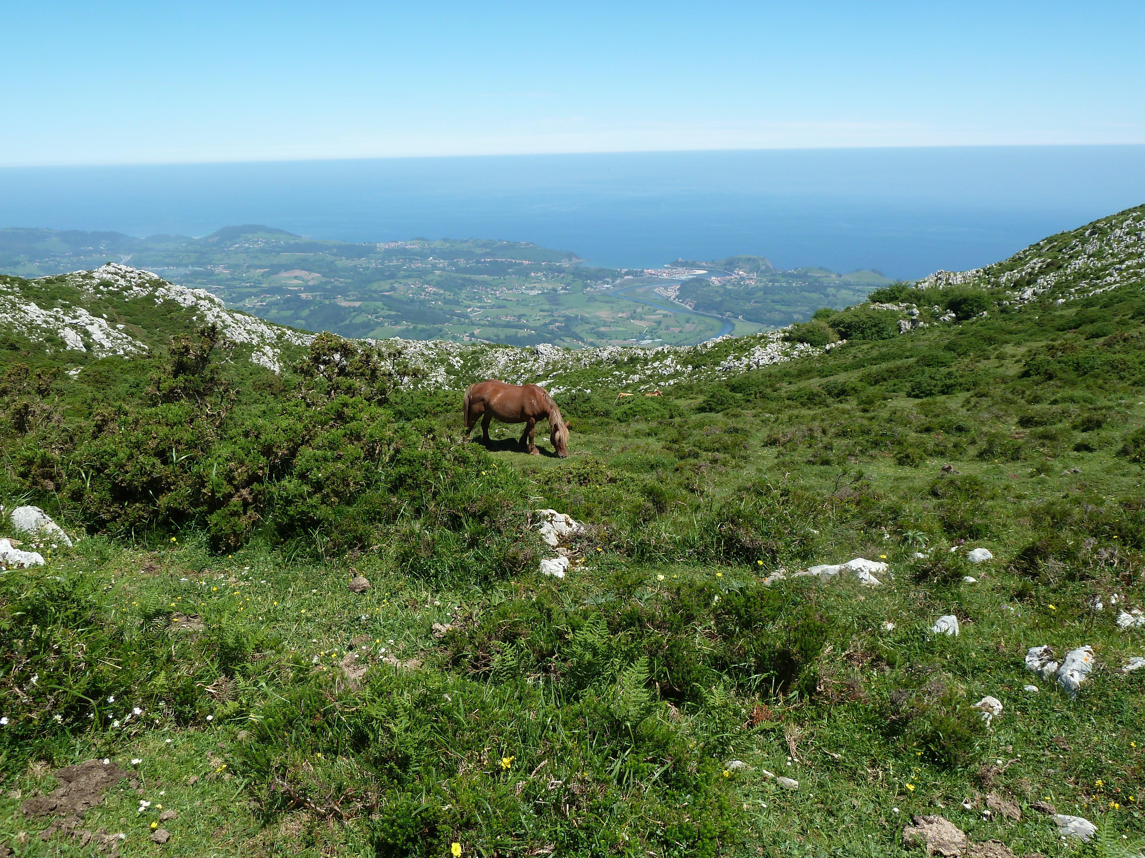 Spanien von oben – wilde Stiere inklusive | Neue Braunschweiger